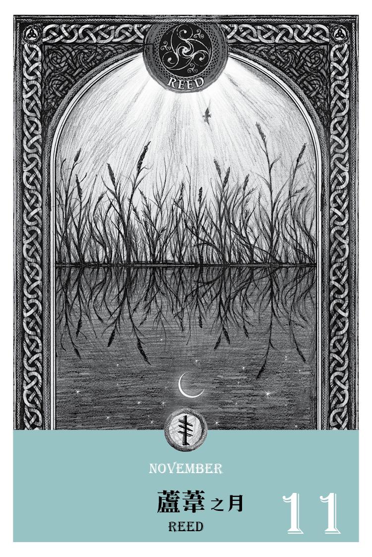 2016魔法手帳-蘆葦