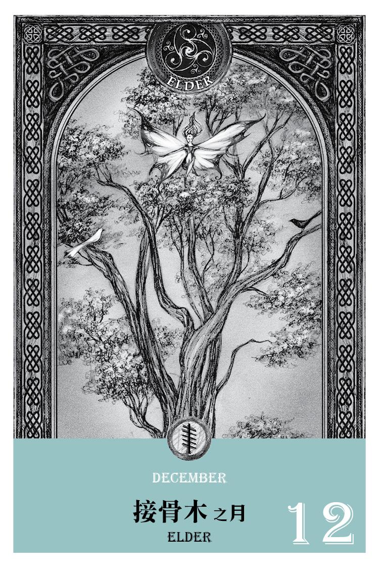 【魔法手帳誌】2016年12月‧接骨木月 11/25-12/22(含槲寄生 12/23 神無日)