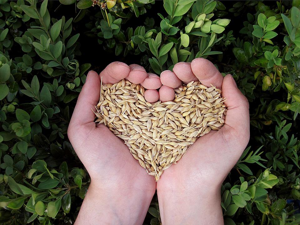 holding grains heart