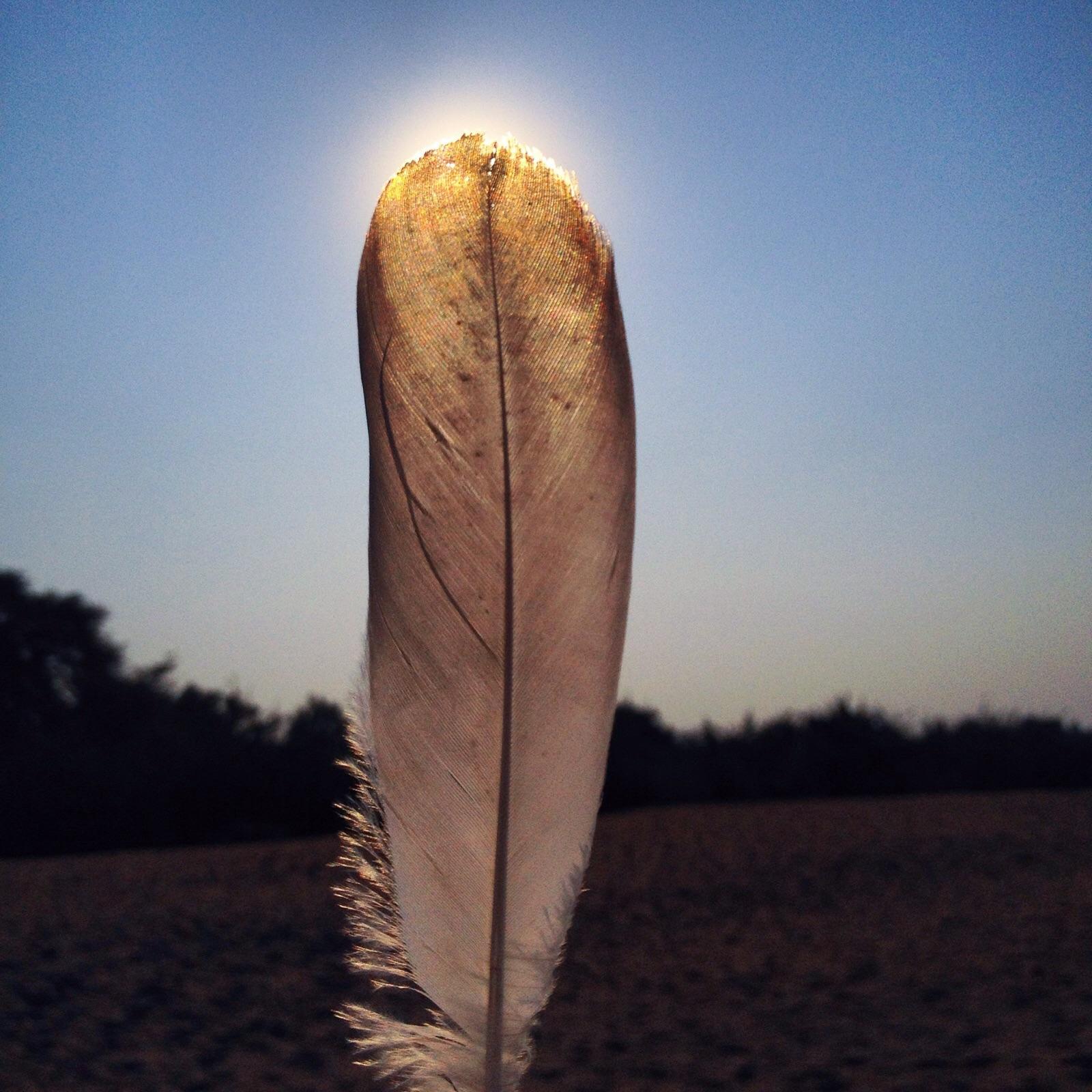 feather pexels-photo-89915